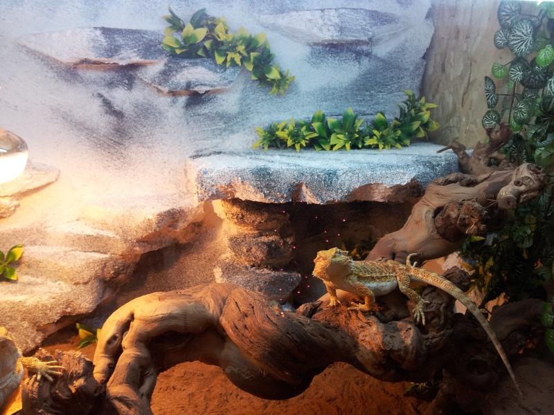 nouveau terrarium pour mes pogo Cgosms10