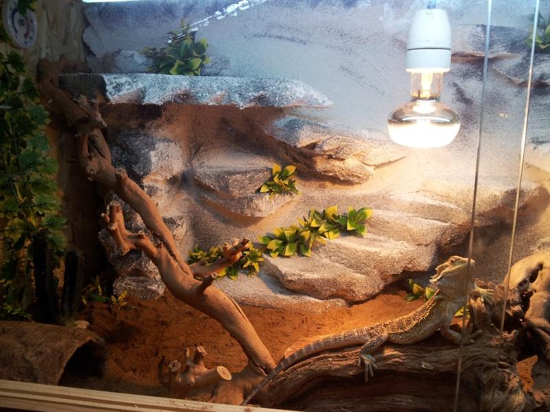 nouveau terrarium pour mes pogo Cgosms11