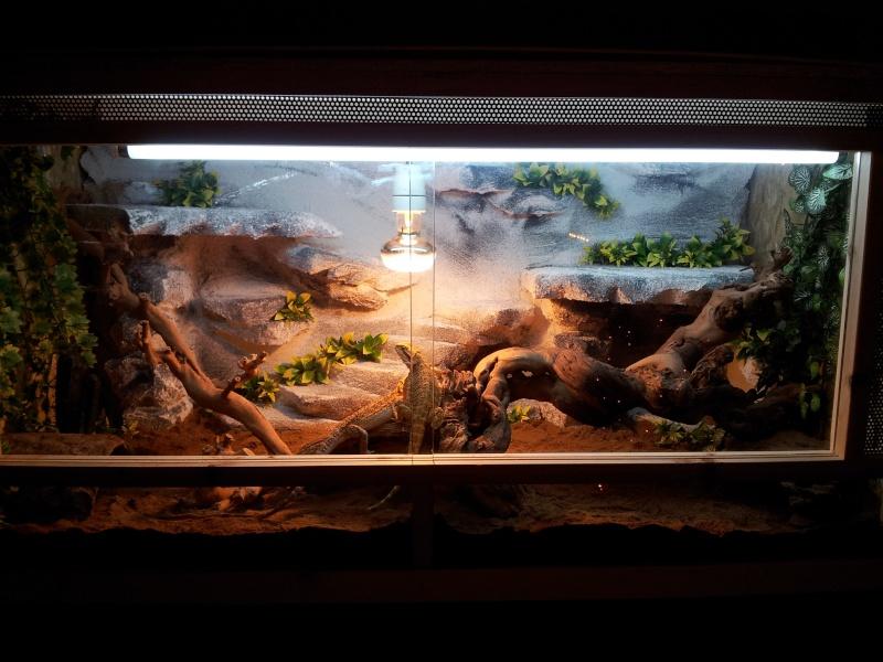 nouveau terrarium pour mes pogo Img_2010