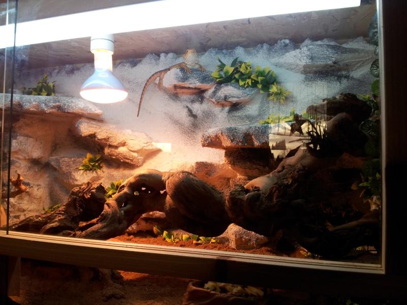 nouveau terrarium pour mes pogo Img_2012