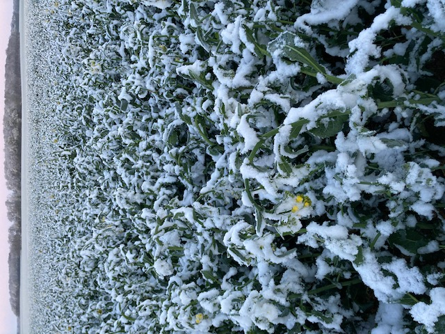 il neige! - Page 5 Img_4110