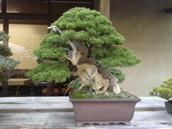 Bonsai Trip To Japan, April 2012 23106910