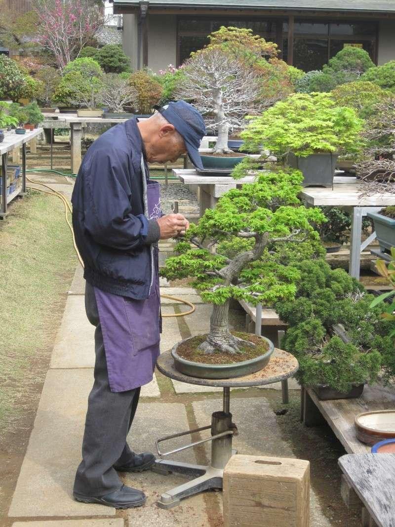 Bonsai Trip To Japan, April 2012 Img_0027