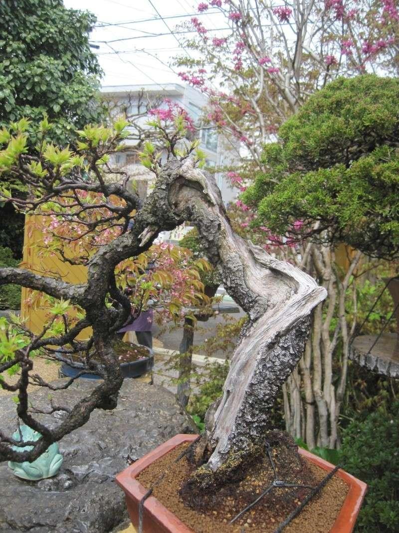 Bonsai Trip To Japan, April 2012 Img_0037