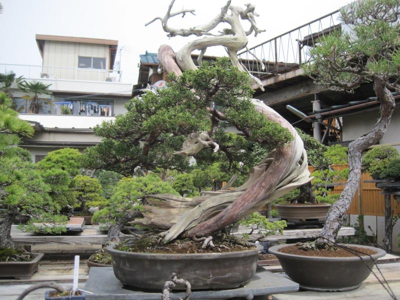 Bonsai Trip To Japan, April 2012 Img_0038