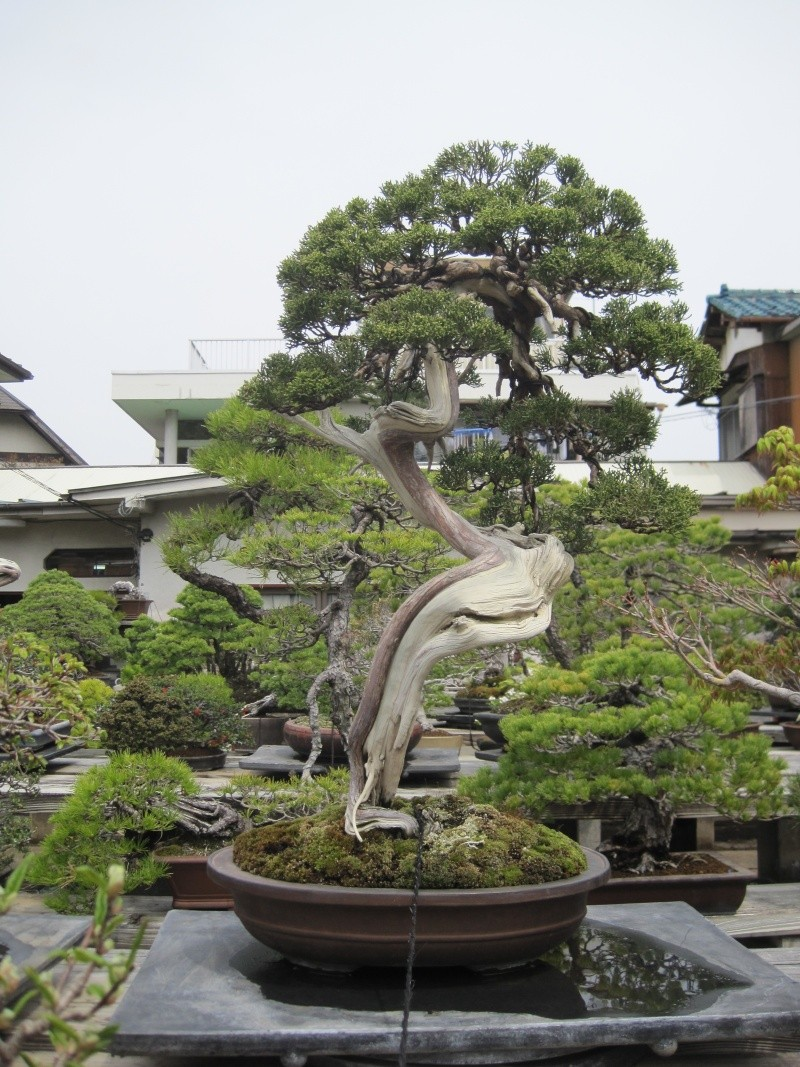 Bonsai Trip To Japan, April 2012 Img_0039