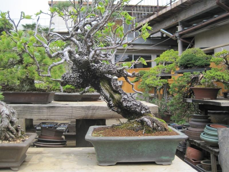 Bonsai Trip To Japan, April 2012 Img_0054