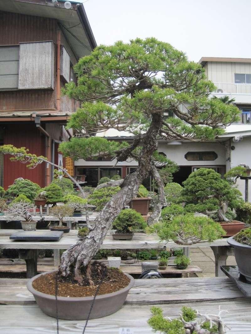 Bonsai Trip To Japan, April 2012 Img_0066