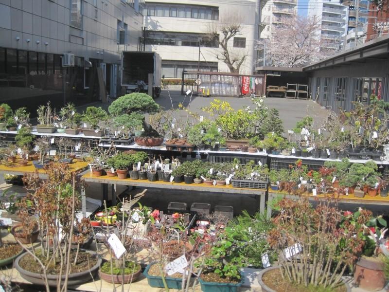 Bonsai Trip To Japan, April 2012 Img_0115