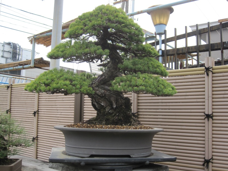 Bonsai Trip To Japan, April 2012 Img_0419