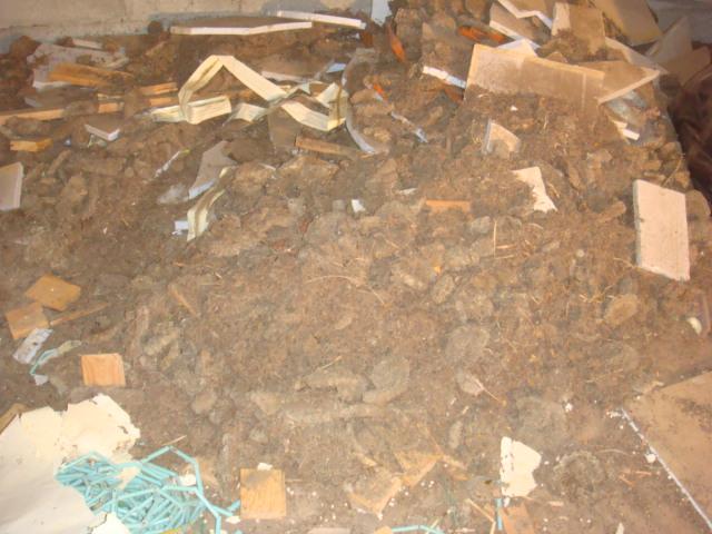Guêpes sous-toiture XXL Dsc04922