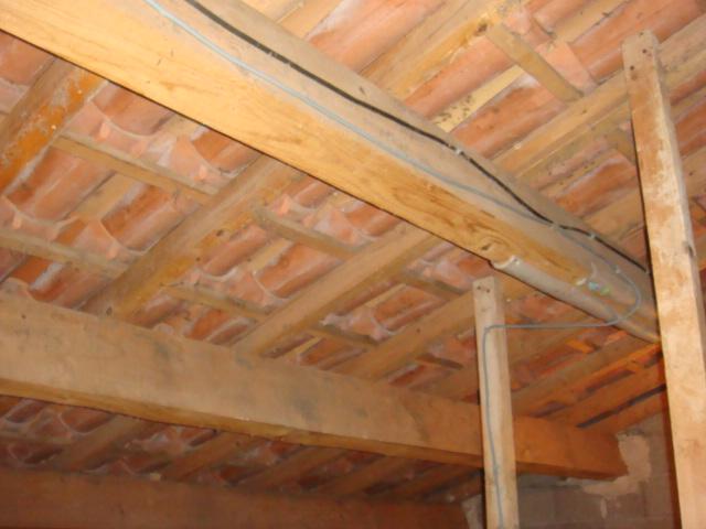 Guêpes sous-toiture XXL Dsc04924