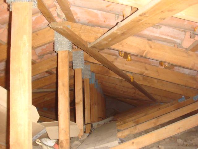 Guêpes sous-toiture XXL Dsc04925
