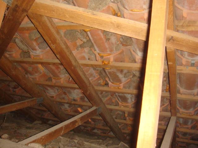 Guêpes sous-toiture XXL Dsc04926