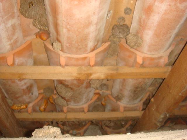 Guêpes sous-toiture XXL Dsc04927