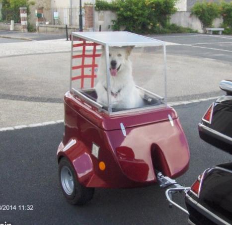 Remorque pour chien pour Electra - Page 2 7d816010
