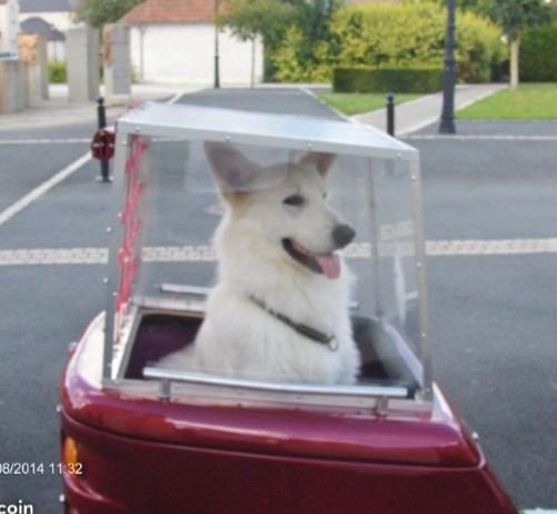 Remorque pour chien pour Electra - Page 2 B0fe4410