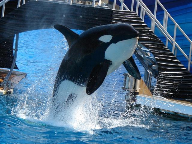 [Orques captives - Biographie] Nakai 78474510