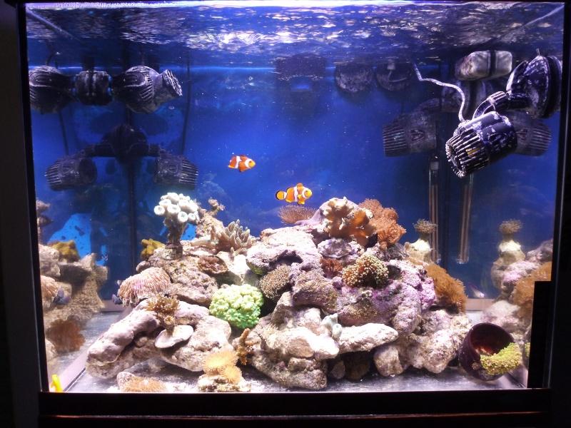 nouvelle aquariophile  P1010814