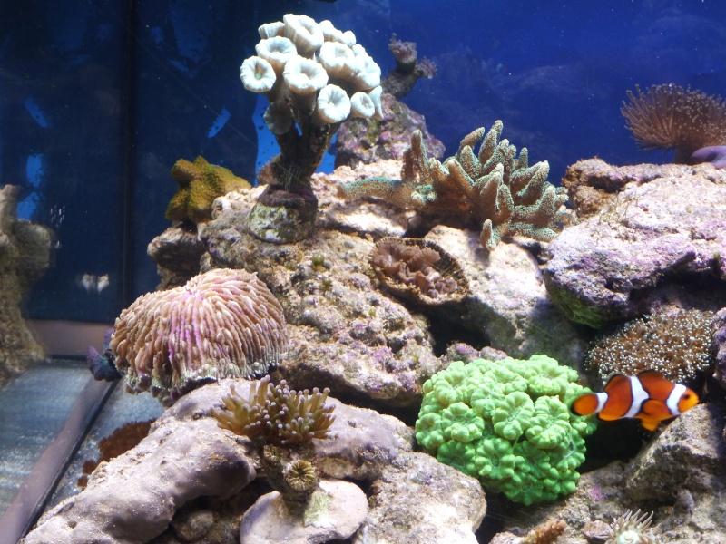 nouvelle aquariophile  P1010815