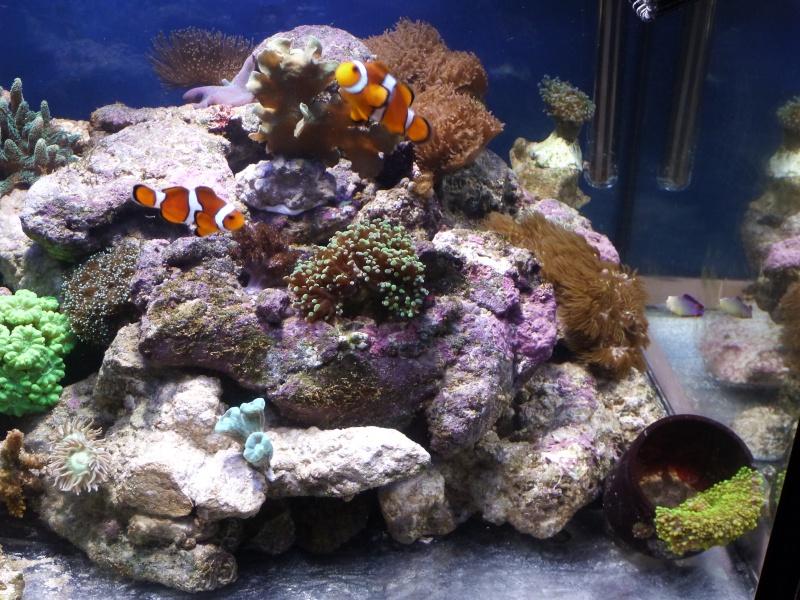 nouvelle aquariophile  P1010816