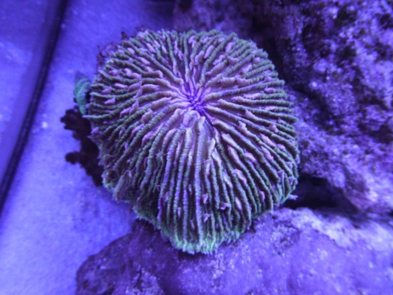 nouvelle aquariophile  P1010819