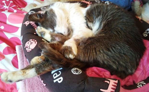 Maousse, mâle gris et blanc né en 2006, Nancy (54) Maouss10