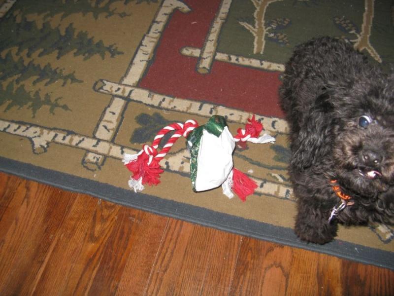 Muffy at Christmas 0113