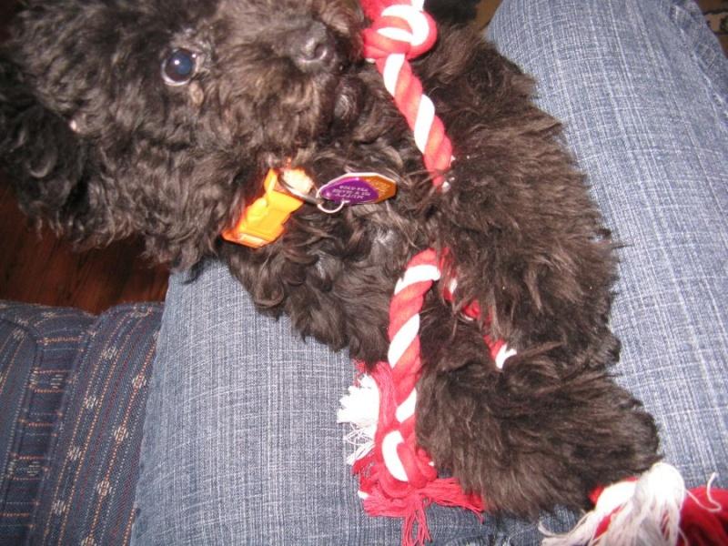 Muffy at Christmas 0210