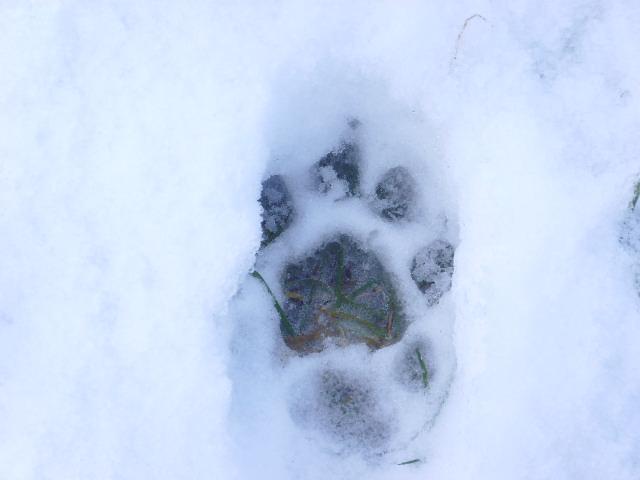 empreintes dans la neige Ssl21513