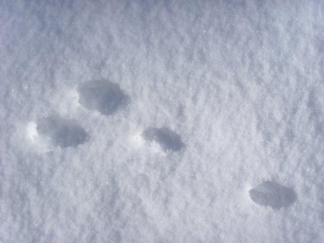 empreintes dans la neige Ssl21514
