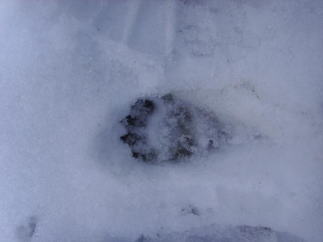 empreintes dans la neige Ssl21515