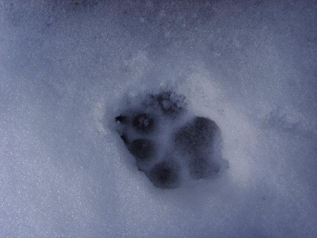 empreintes dans la neige Ssl21516