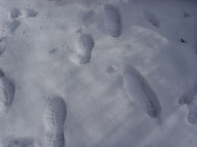 empreintes dans la neige Ssl21517