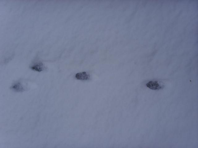 empreintes dans la neige Ssl21518
