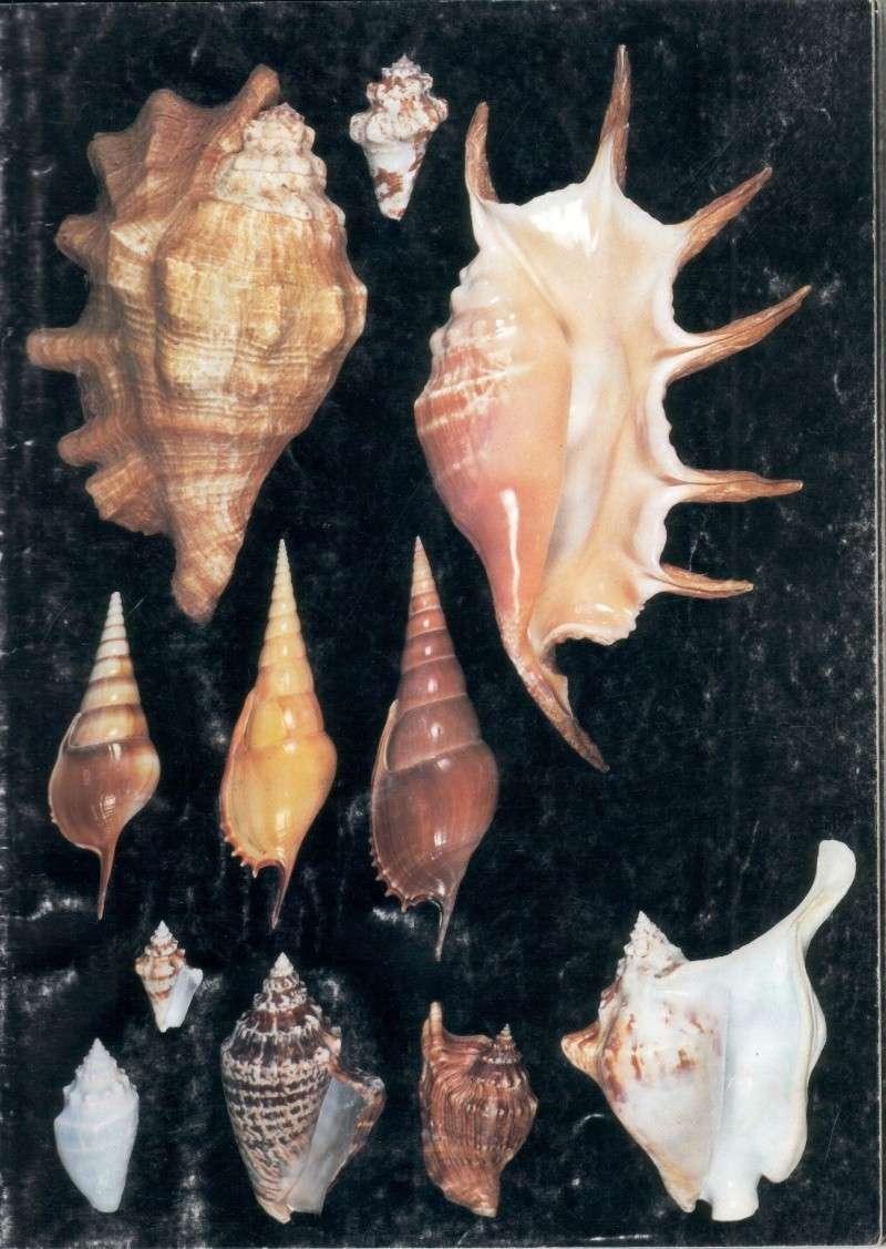 Strombidae Tricornis tricornis - ([Lightfoot], 1786) - Page 2 Red_se10