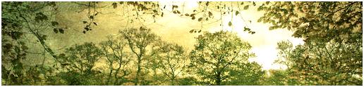 La Forêt de Tilleuls