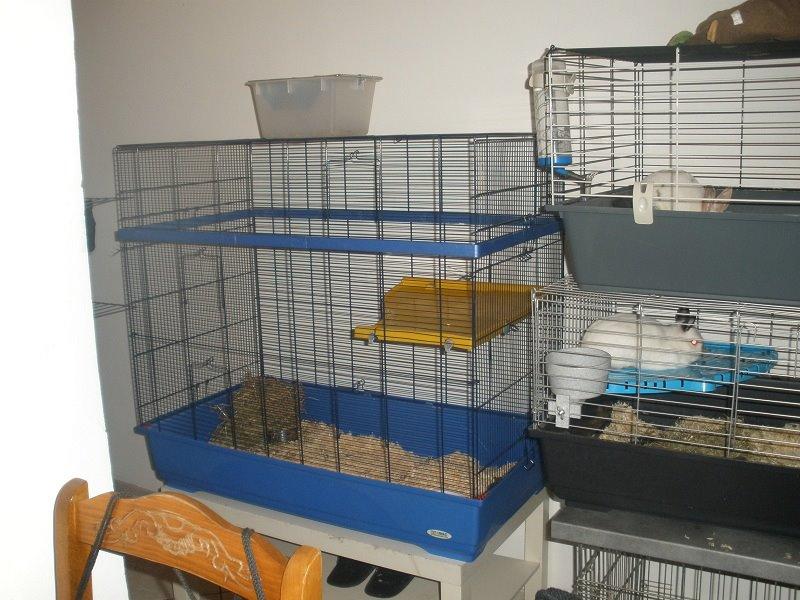 Vend cage Imac rat prince bleu  (80) 50€ 53238010