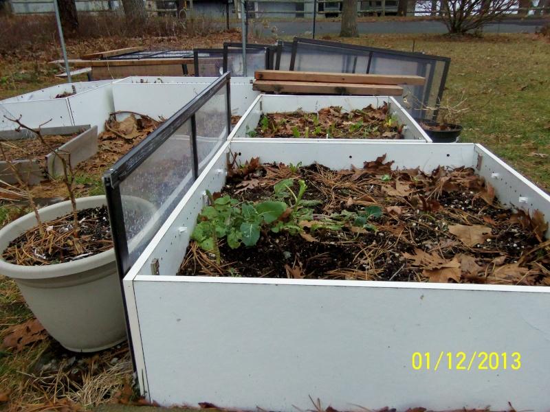 Winter Garden Questions 100_4515