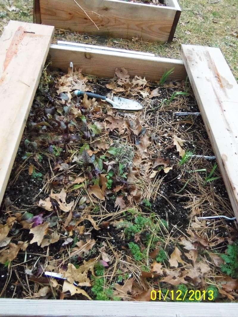 Winter Garden Questions 100_4516