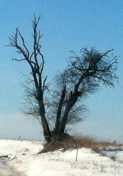 un arbre en hiver - résultats Arbrec10