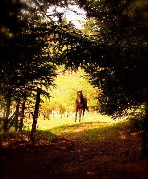 La mort du cheval de ma mamie sur qui je suis montée pour la première fois 54793410