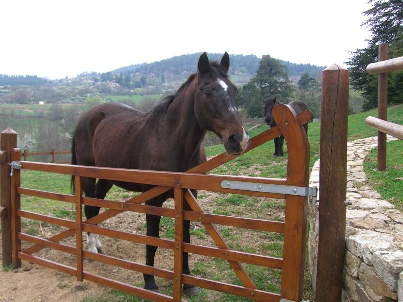 La mort du cheval de ma mamie sur qui je suis montée pour la première fois N_39610