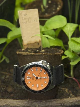 La montre de votre passage en 2013 Pict0017