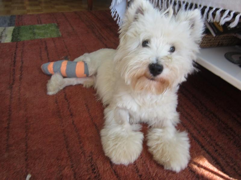 mon petit chien  Img_0310
