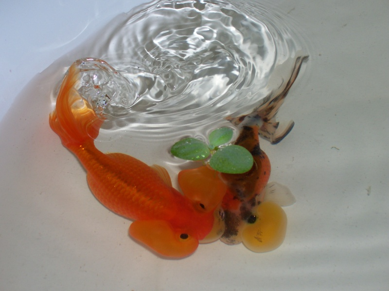bubble eye goldfish 01510
