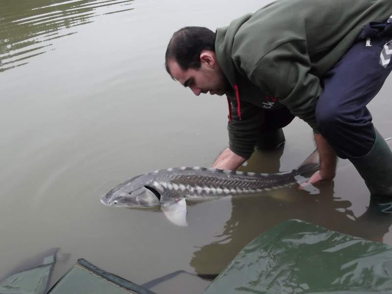 quelques poissons de 2012 Dscf0014