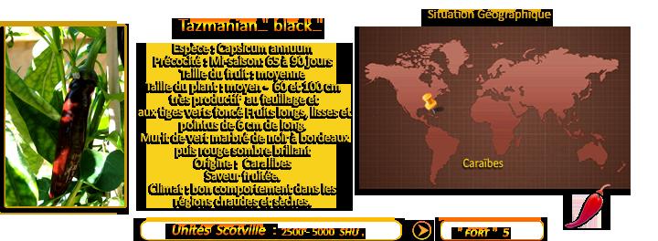 """Type """" Tazmanian"""" Base-f16"""