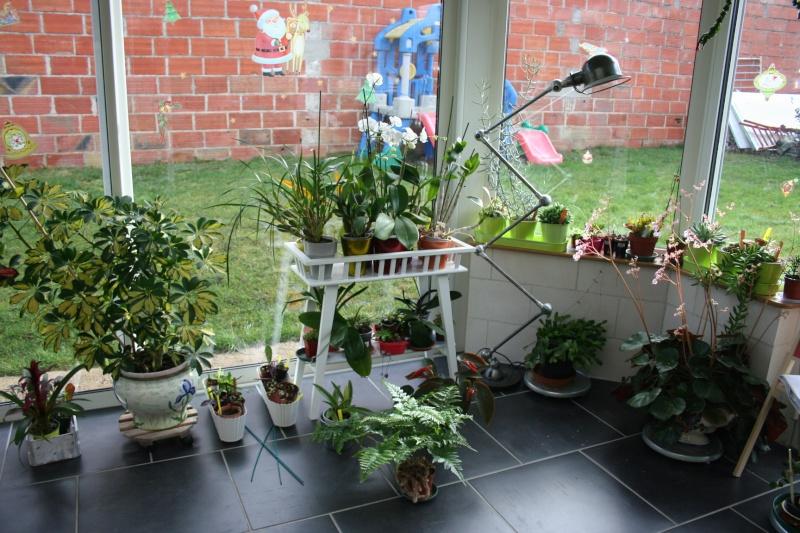 ma véranda, mon petit paradis végétal ... - Page 4 Img_4642