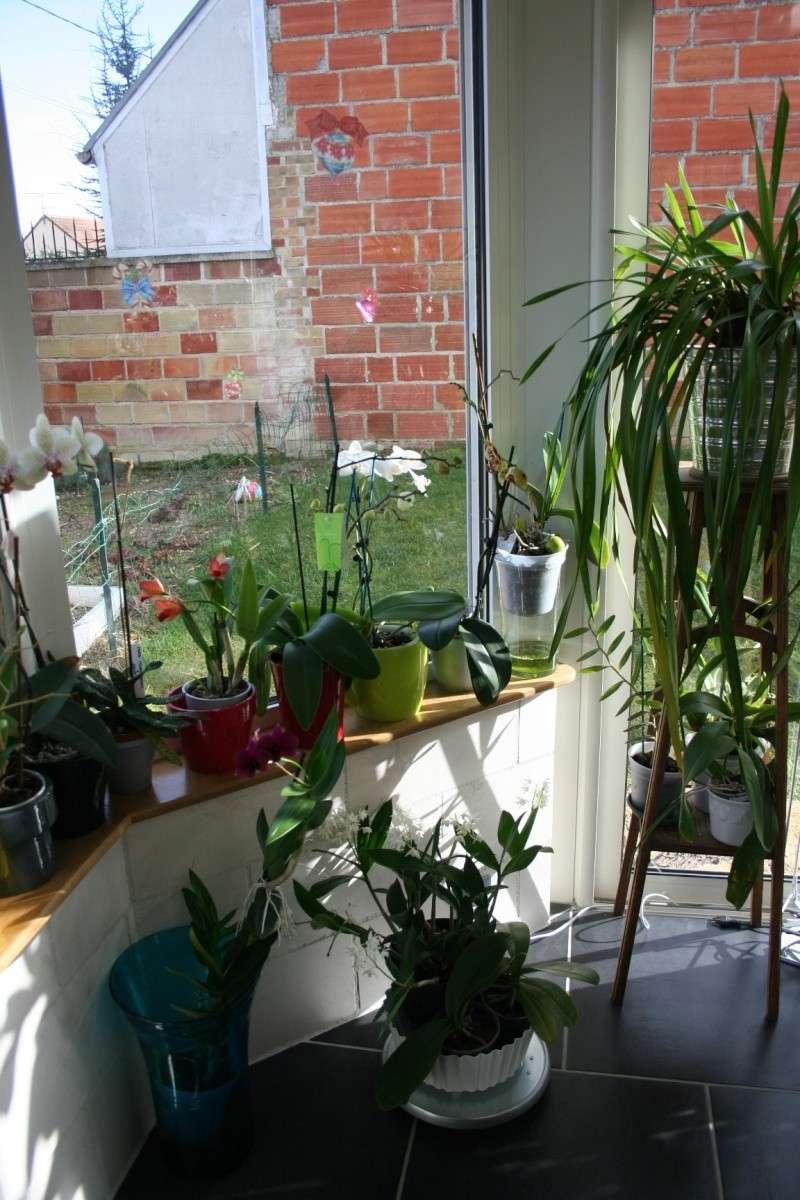 ma véranda, mon petit paradis végétal ... - Page 4 Img_4645